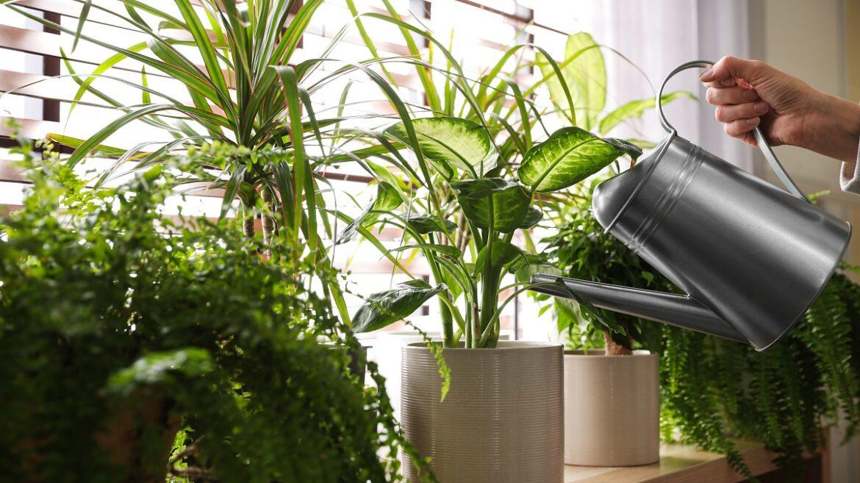 4 Zero-waste Indoor Plant Fertilizers