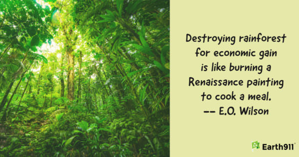 Earth911 Inspiration: Destroying Rainforest for Economic Gain Is Like ….