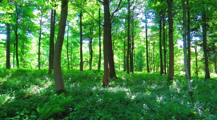 How to Go Forest Bathing, and Why You Should