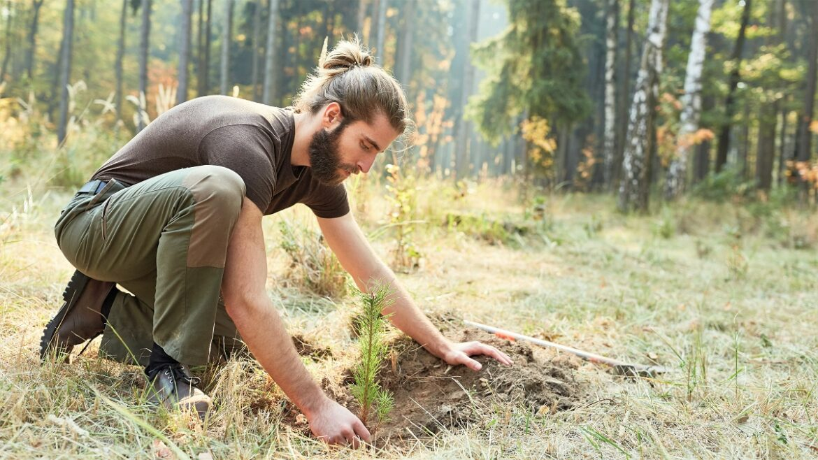 7 Easy Ways To Plant a Tree Where It's Needed Most