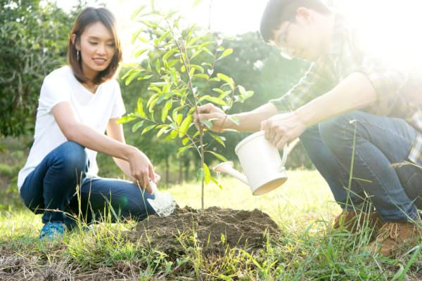 A Call to Action on Arbor Day to Help Our Planet
