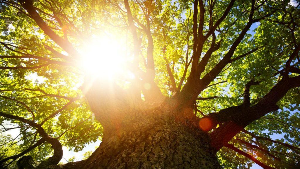 Alternatives to Tree Removal