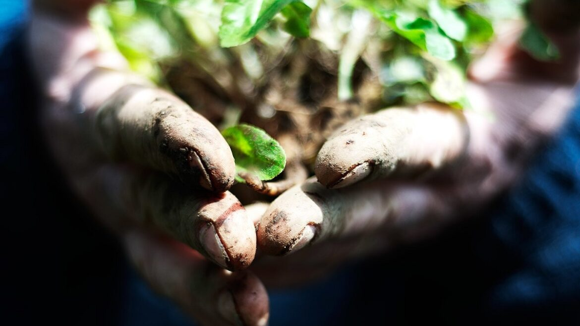 Earth Day 101: Baby Steps to Going Green