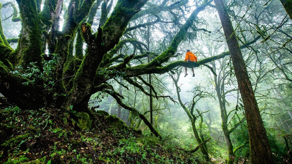In Honor of Trees: How To Celebrate Arbor Day
