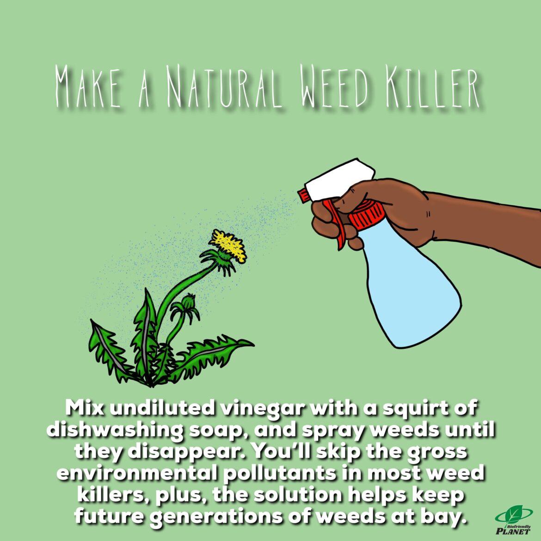 Make A Natural Weed Killer | Tuesday Tip