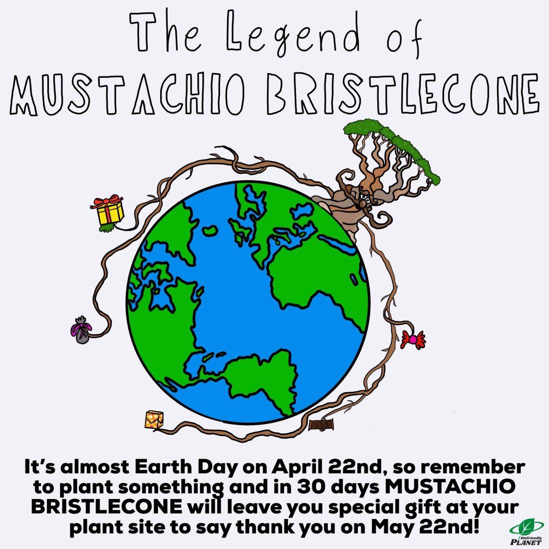Mustachio Bristlecone | Tuesday Tip