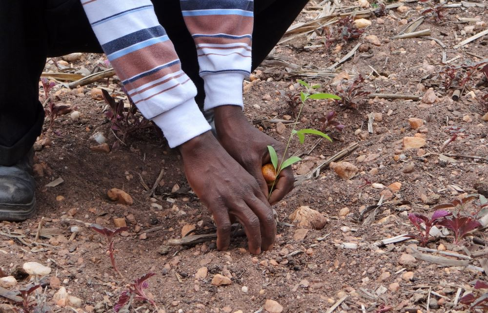 Restore Our Earth With Reforestation
