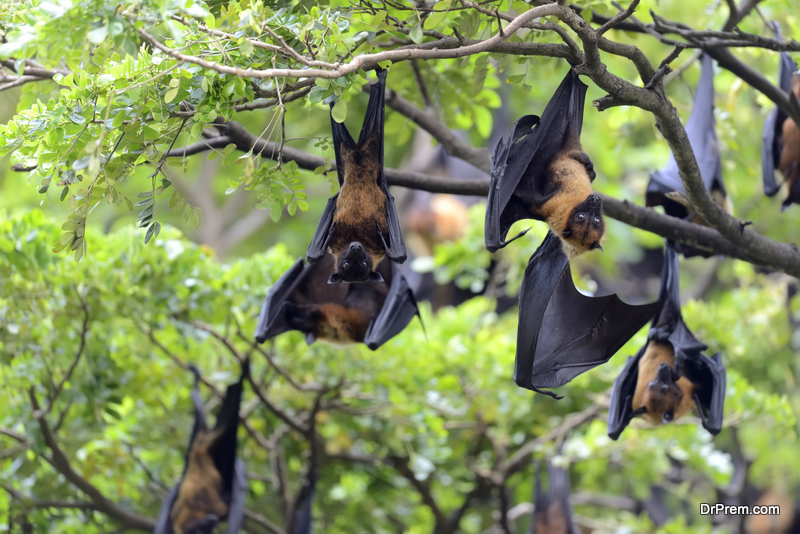 The Ecological Importance of Bats: Why to Conserve Them?