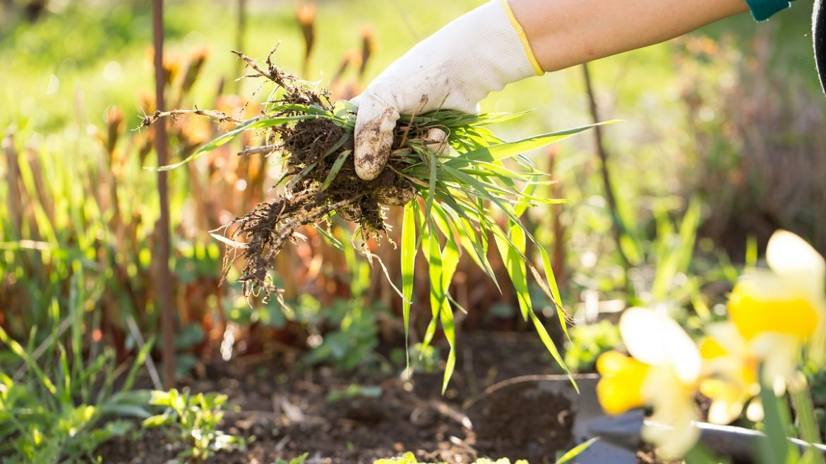 4 Ways to Kill Weeds the All-Natural Way