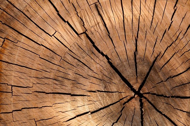 5 services offered by tree service specialists