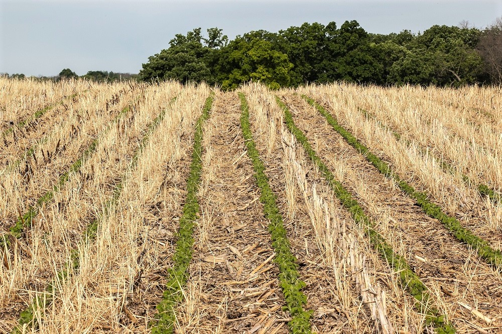 Are Corporate Claims of Regenerative Agriculture Real?