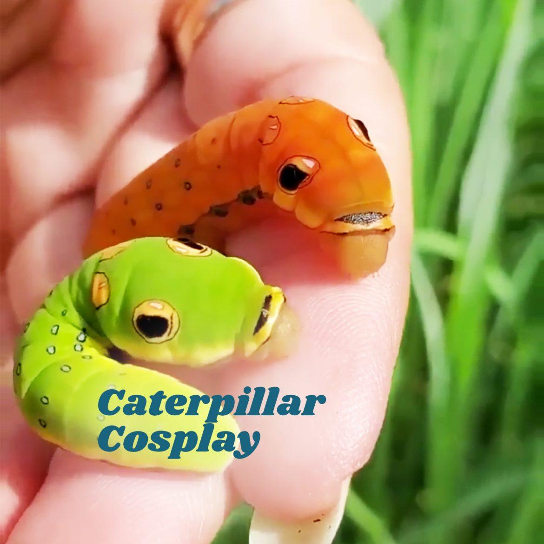Caterpillar Cosplay