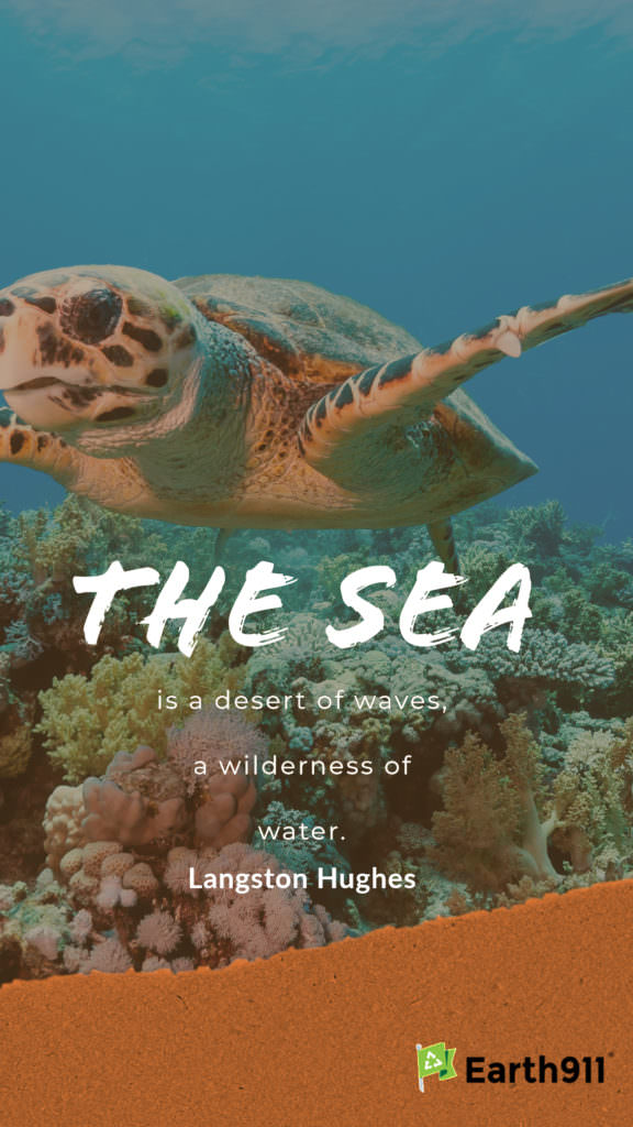 Earth911 Inspiration: The Sea Is a Wilderness