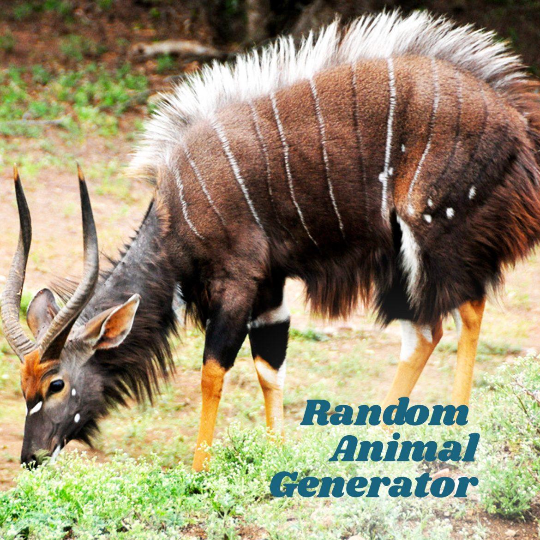 Random Animal Generator