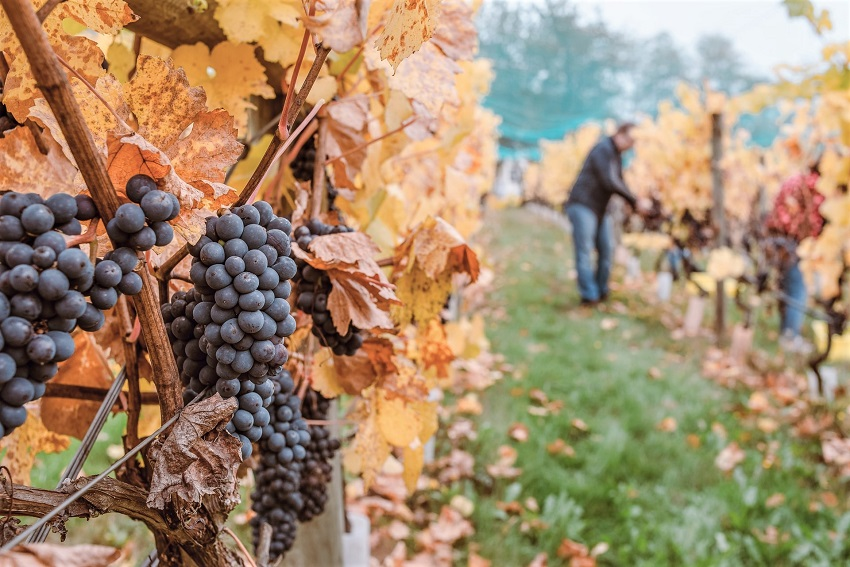 The Wide World of Sustainable Wine