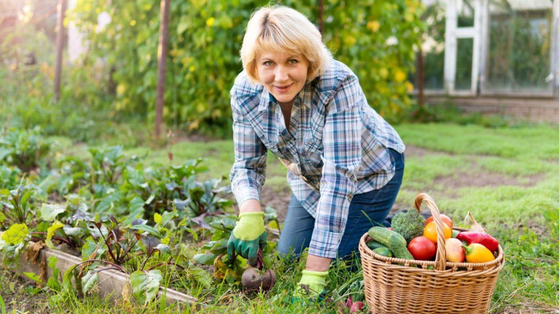 How To Start a Regenerative Garden in Your Backyard