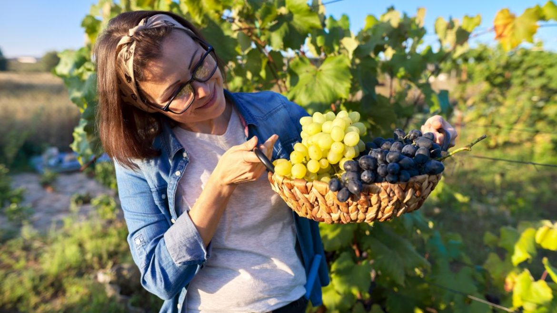 Maven Moment: Local, Autumn Grapes