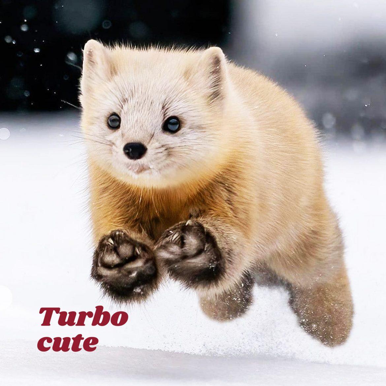 Turbo cute