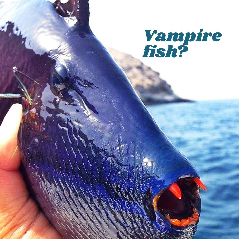 Vampire fish?
